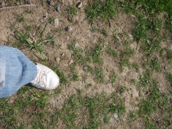 patchy lawns and grass problems